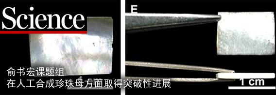 近日,中国科学技术大学合肥微尺度物质科学国家实验室、化学与材料科学学院俞书宏教授课题组在人工合成珍珠母的方法上取得突破性进展。不同于以往仿珍珠母材料或仿生矿化方法得到的微观晶体,俞书宏课题组首次通过模拟天然珍珠母生长过程而获得了人工仿生结构材料,这种材料具有与天然珍珠母高度相似的化学组分和微观结构,并因此兼具强度及韧性。该成果以Synthetic nacre by predesigned matrix-directed mineralization为题发表在10月7日出版的《科学》杂志上(Science